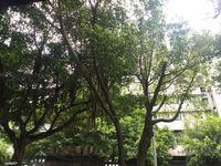 出售宏声桥 私房29.05平米88万商铺